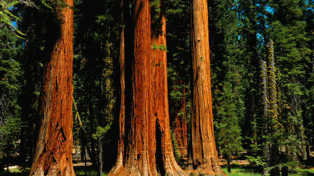 california-redwoods-628x353.png