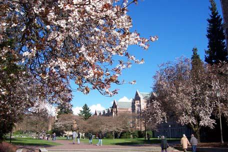 华盛顿大学圣路易斯分校.jpg