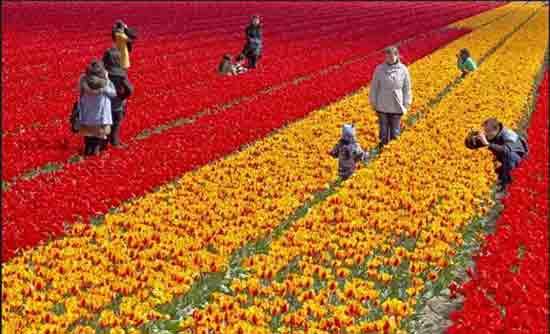 荷兰美景4.jpg