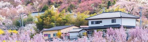 樱花下的日本民居.jpg