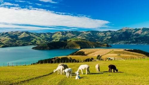 新西兰留学除了专升本 还能专升硕