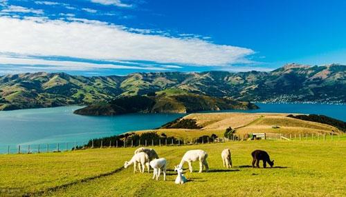 新西兰果然是个好去处!盘点那些值得新西兰人骄傲的世界排名