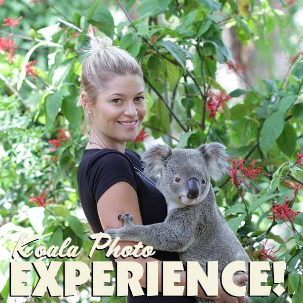 Currumbin koala-photo.jpg