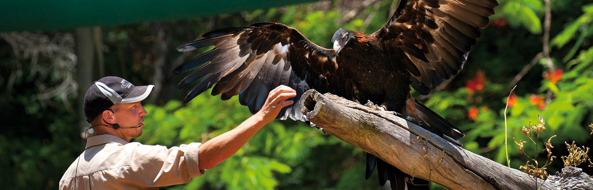 currumbin eagle-Final.jpg