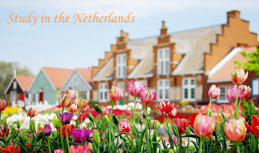 study in the netherlands tulips-holland-mi-kirk-stanley.jpg