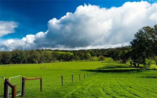 澳大利亚草原.jpg