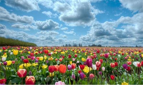 荷兰花圃.jpeg