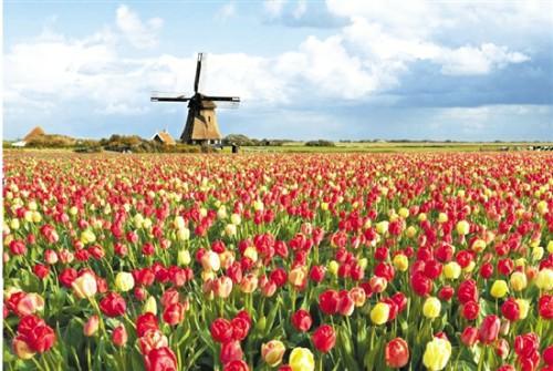 荷兰 (2).jpg