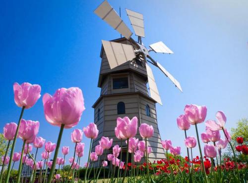 没时间啦!荷兰奖学金第一批将在2月1日截止申请!