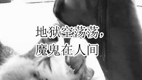 生而为人,请善良!中国留学生在澳虐猫判刑6个月……