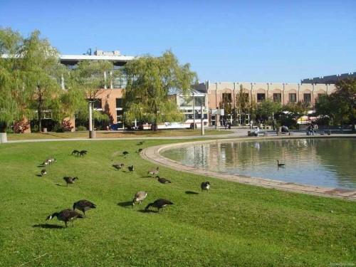 约克大学1.jpg