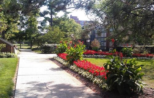 南昆士兰大学在国内认可度