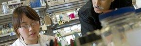 香港科技大学的化学与生物分子工程硕士专业怎么样?